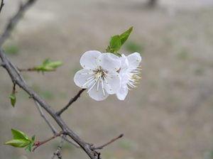 "The ""Renew, Rejuvenate, Awaken to the Magic of Spring"" Ritual"