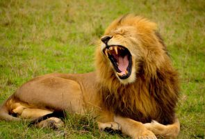 Feeling Not Good Enough? Stand Up and Roar!